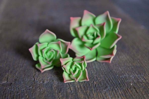 Zucker-Succulenten Echeveria, 3 Stck., 9 + 6 + ...