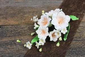 Zucker-Lilien apricot, 15 cm