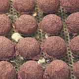 Fruchtpuder Cassis  100 g