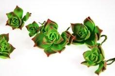 Zucker-Succulenten Echeveria, 3 Stck., 9 + 6 + 3,5 cm