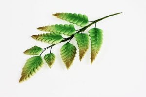 Farnblätter aus Zucker, 6 Stück, 9 - 15 cm